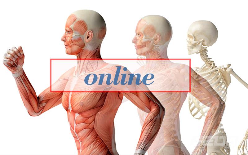 curso-online-fundamentos-de-la-motricidad-humana-feda-malaga-a1